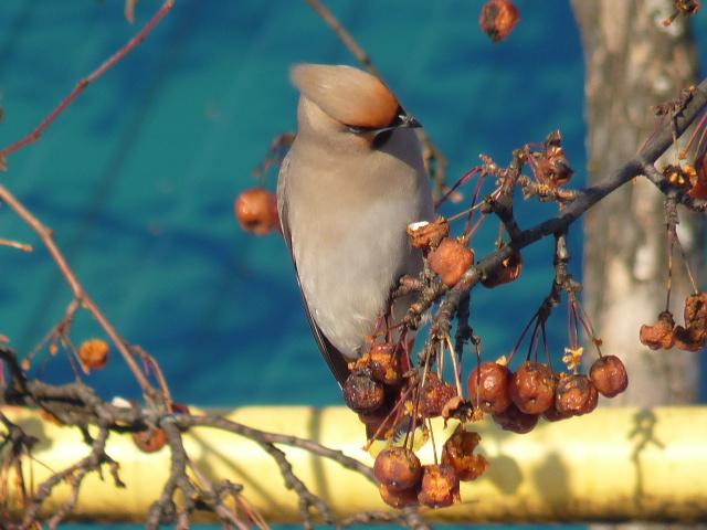 Картинки зимующие птицы башкортостана